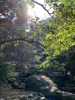 川のある自然の写真・画像素材[4871165]