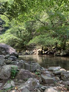 水辺の風景の写真・画像素材[4871166]
