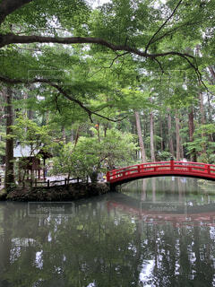 池にかかる橋の写真・画像素材[4877581]