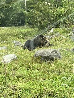緑豊かな畑に立っているクマの写真・画像素材[4879199]