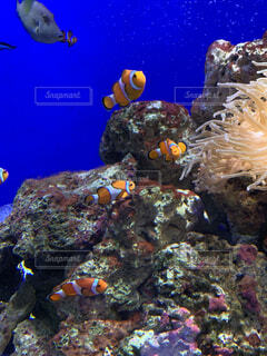 水中のグループの写真・画像素材[4879206]