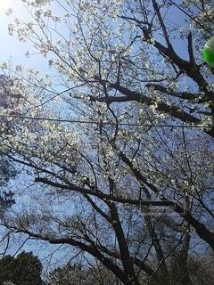 大きな木の写真・画像素材[4880782]