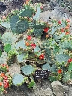 庭のサボテンの写真・画像素材[4880778]