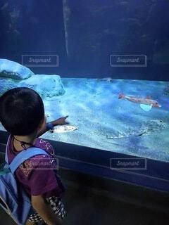 窓の前に立っている小さな男の子の写真・画像素材[4880781]