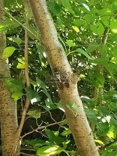木の枝に止まっている鳥の写真・画像素材[4880783]