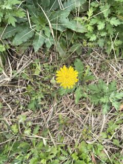 花のクローズアップの写真・画像素材[4915028]