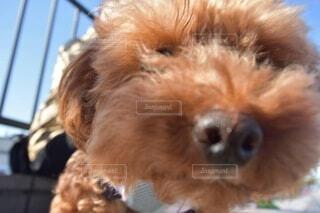 犬のクローズアップの写真・画像素材[4871486]
