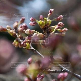 花のクローズアップの写真・画像素材[4871487]