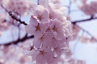 花のクローズアップの写真・画像素材[4871491]