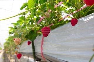 花のクローズアップの写真・画像素材[4871500]