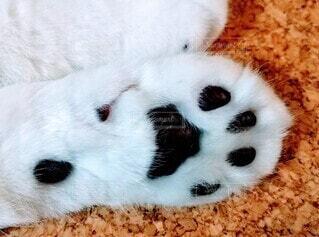 猫の肉球の写真・画像素材[4874556]