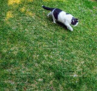 芝生でお散歩の写真・画像素材[4874579]