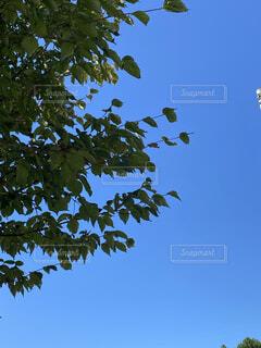 晴れ 空の写真・画像素材[4871338]