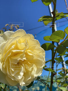 黄色 花の写真・画像素材[4871953]