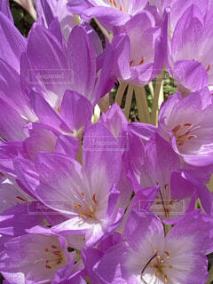紫  花の写真・画像素材[4872148]