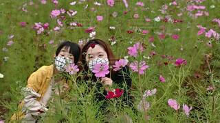 花の中の写真・画像素材[4873475]