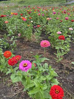 お花畑の写真・画像素材[4873467]