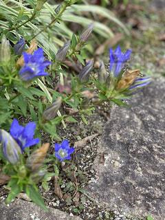 青い お花の写真・画像素材[4896951]