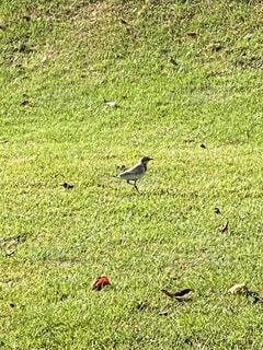 鳥の写真・画像素材[4926856]