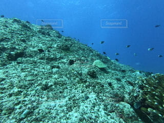グアムどこまでも広がる海の中の写真・画像素材[4873491]