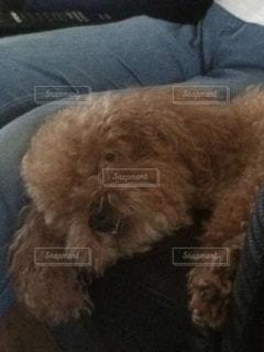 犬の写真・画像素材[220544]