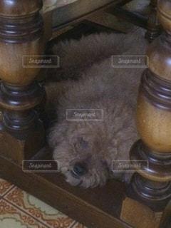 犬の写真・画像素材[220548]