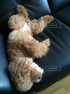 犬の写真・画像素材[220555]