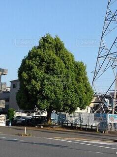 一本の木の写真・画像素材[4873257]