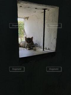 猫の写真・画像素材[4872115]