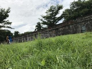 草の中に立っている人のカップルの写真・画像素材[4873361]