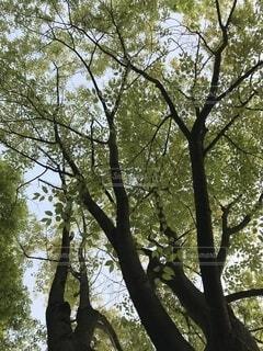 大きな木の写真・画像素材[4873357]