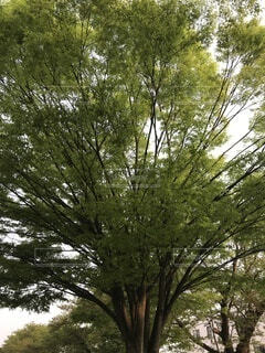 森の中の木の写真・画像素材[4873359]