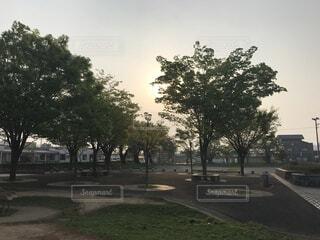 早朝の公園の写真・画像素材[4873355]