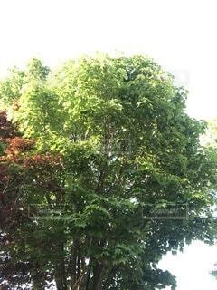 森の中の木の写真・画像素材[4875721]
