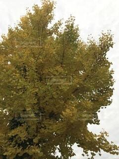 木のクローズアップの写真・画像素材[4875720]