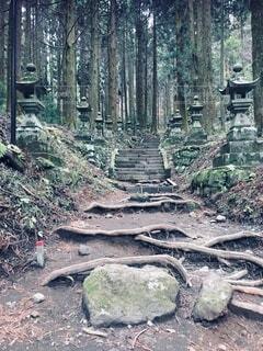 神社へ続く道の写真・画像素材[4872021]