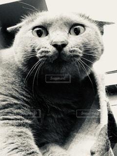 怒ったネコの写真・画像素材[4872015]