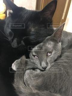 猫の変な寝顔の写真・画像素材[4875445]