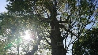大きな木の写真・画像素材[4872203]