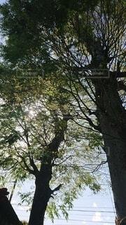 木のクローズアップの写真・画像素材[4872436]