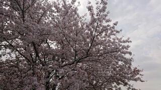 木のクローズアップの写真・画像素材[4872440]