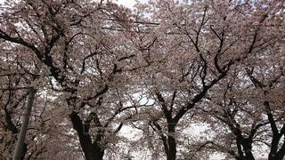 木のクローズアップの写真・画像素材[4872445]