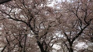 森の中の木の写真・画像素材[4872446]