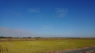 背景に木々のある大きな緑の畑の写真・画像素材[4872449]