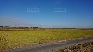 緑の畑のクローズアップの写真・画像素材[4872447]