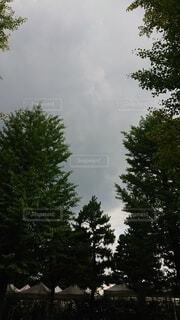 背の高い木の写真・画像素材[4872450]