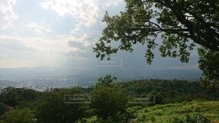 背景に山のある木の写真・画像素材[4872453]