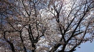 森の中の木の写真・画像素材[4872461]