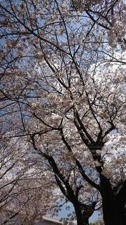 森の中の木の写真・画像素材[4872459]