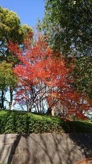 木のクローズアップの写真・画像素材[4872473]